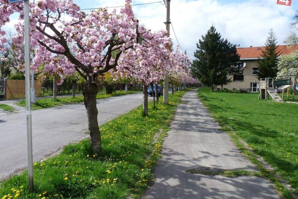 FOTO: Bystrická ulica doslova kvitne krásou: Aj takto vyzerá jar pod Urpínom!