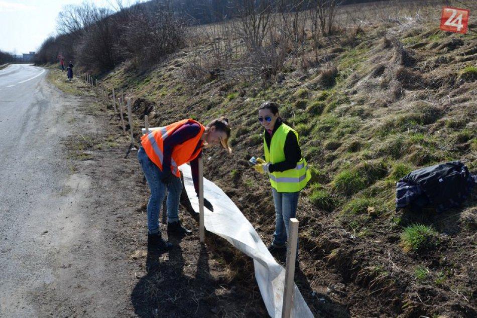 Žaby vyrazili na cesty: Pri Prešove tak postavili zátarasy