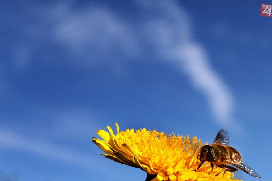 FOTO: Včely na paneláku v Ťahanovciach!