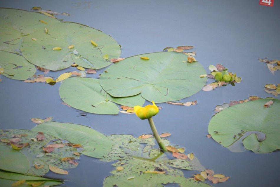 Rybníky s domčekom na strome: Rozprávkové miesto v michalovskej dedinke