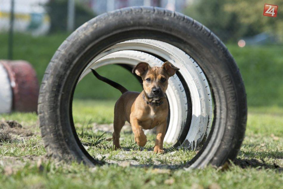 Výbehy pre psov