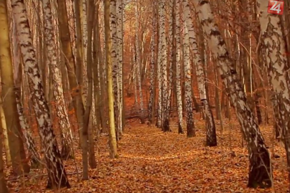 FOTO: Zábery prírody z úchvatného videa mladého Bystričana