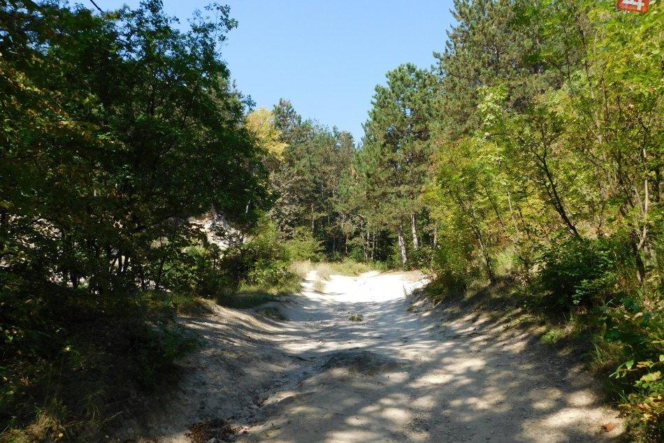 OBRAZOM: Viete o nich? Takéto lákavé lesy môžete nájsť v okolí Trnavy!