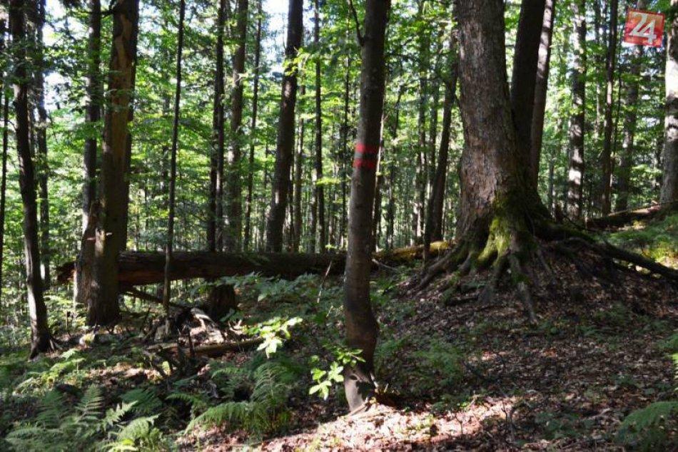 FOTO:Unikátny prales len pár kilometrov od Brezna
