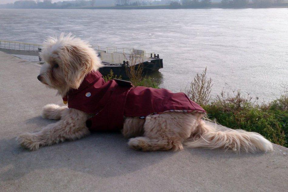 Obliekanie psíkov