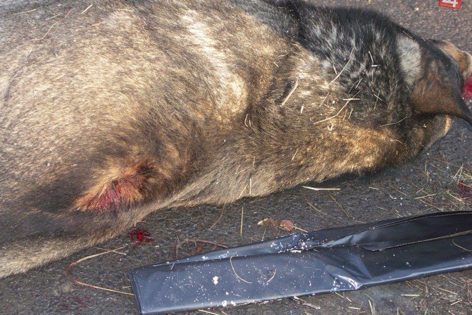 V OBRAZOCH: Neznámy páchateľ zastrelil psa priamo na sídlisku v Lučenci