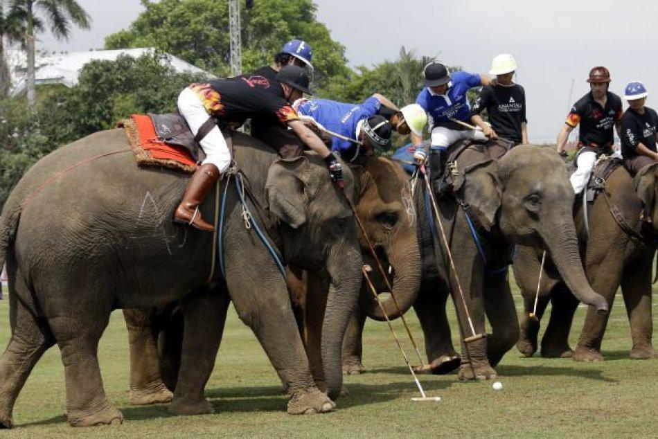 KURIOZITA DŇA: Medzi najbizarnejšie športy patrí slonie pólo