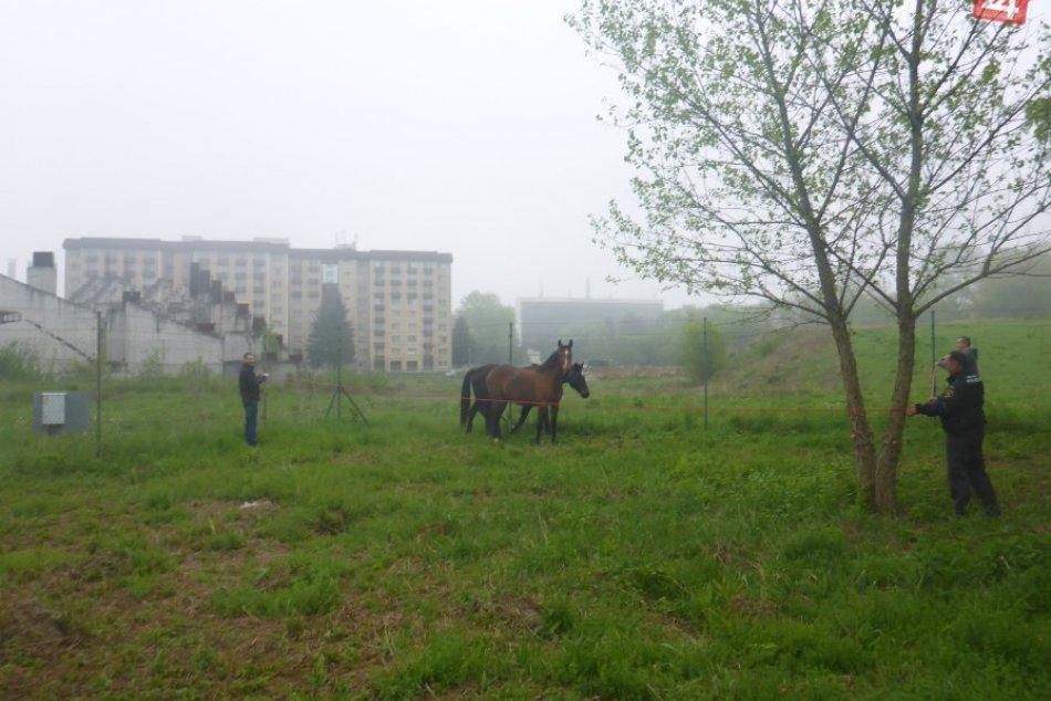 V OBRAZOCH: Mestskí policajti v akcii. Vo Zvolene chytali kone