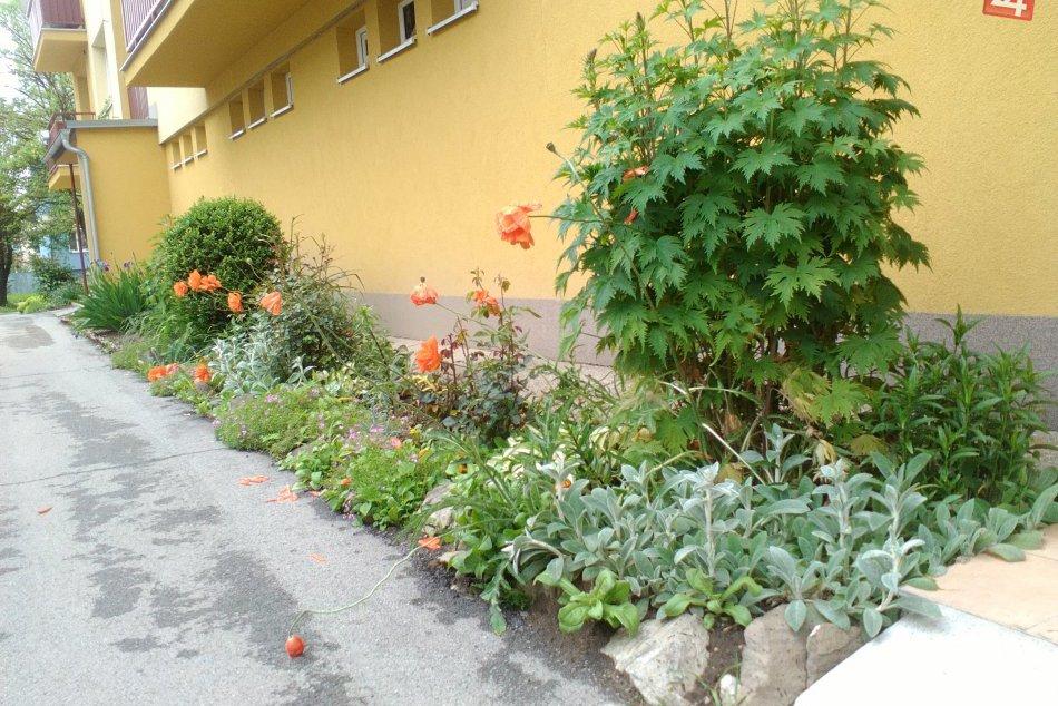 V OBRAZOCH: Kvitnúce záhradky v Brezne