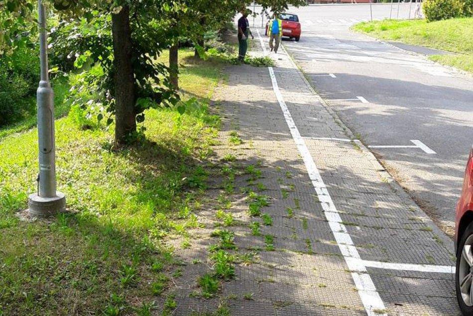 Na Belanskej ulici odstránili zeleň, ktorá zasahovala na chodník