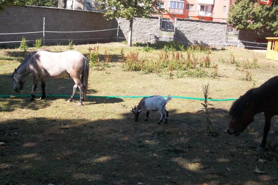 V parku sú nové zvieratká: Babičkin dvor má ďalších obyvateľov