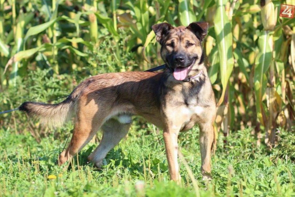 Psi v žilinskom útulku