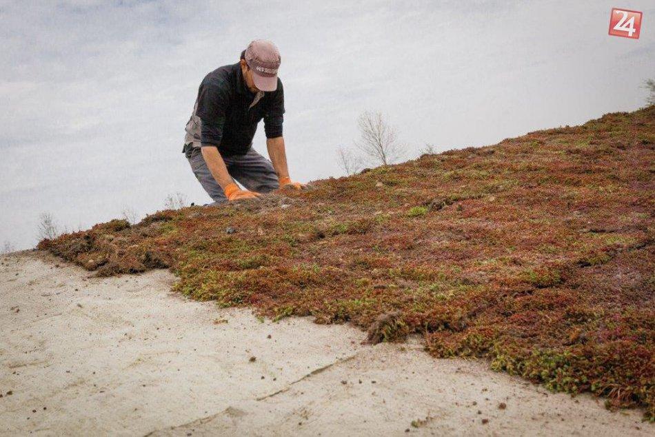 Zelené strechy by sme mohli mať aj v našom meste