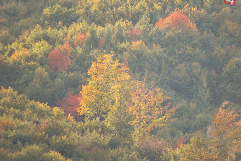 Jesenné zábery z Prešova: Aj takéto pekné obrázky môže vaše oko zočiť