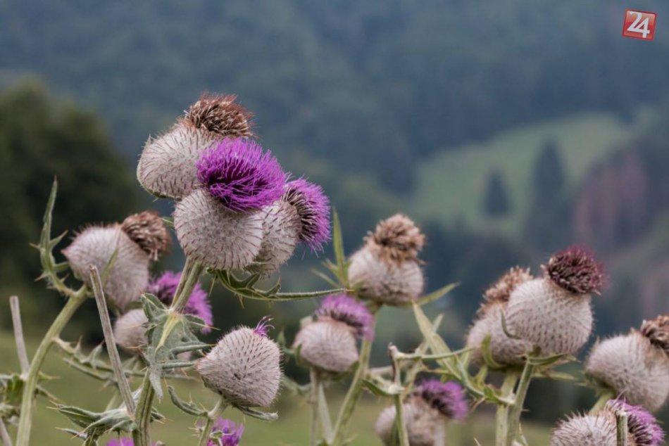 Obrazom: Jesenné fotky z okolia Dediniek vás dostanú