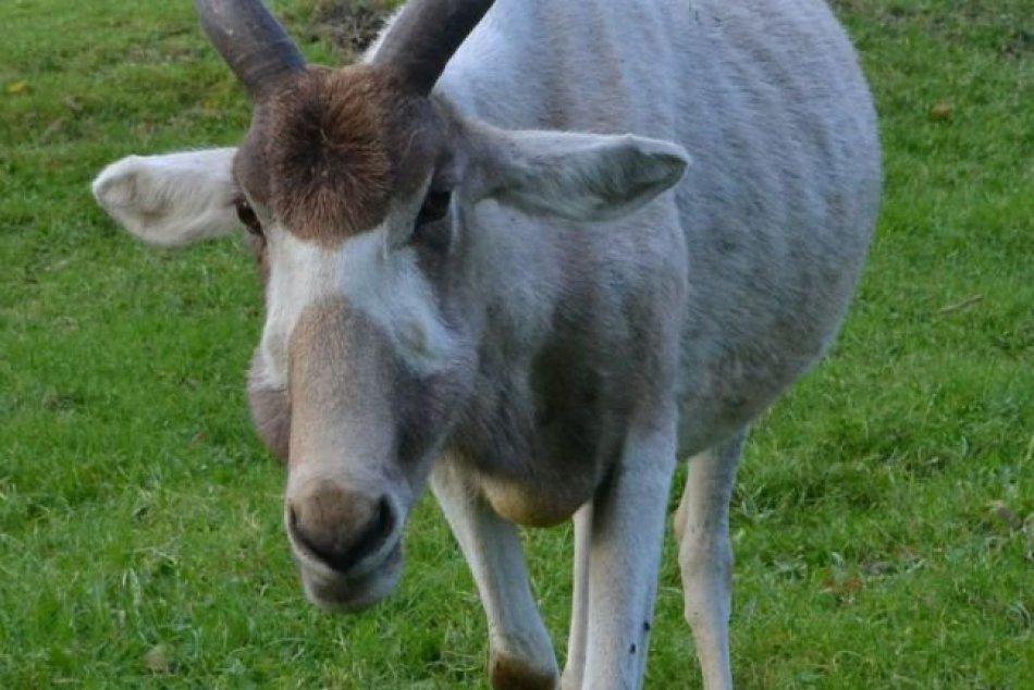 Nové zvieratá v bratislavskej ZOO