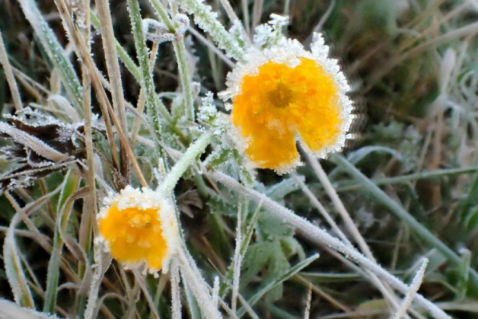 Obrazom: Kvitnúce kvety v januári