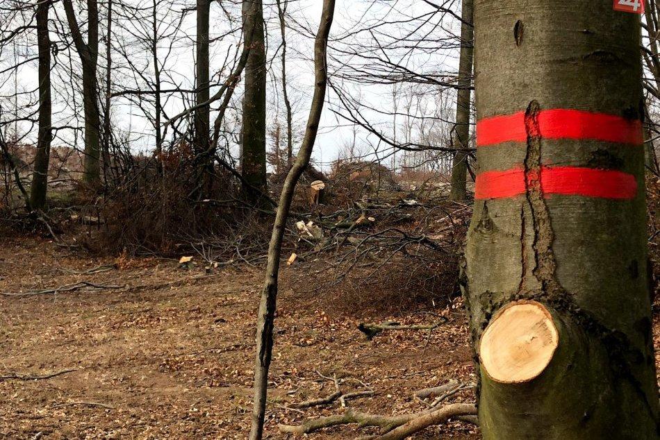 Bratislavčania sa búria proti masívnej ťažbe dreva