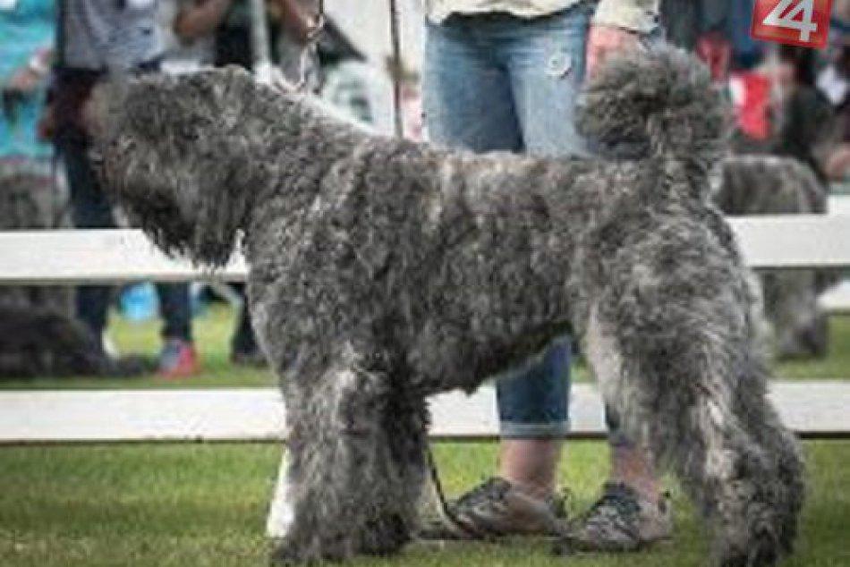 FOTO: Košičanka chová psov, akých ste možno ešte ani nikdy nevideli!