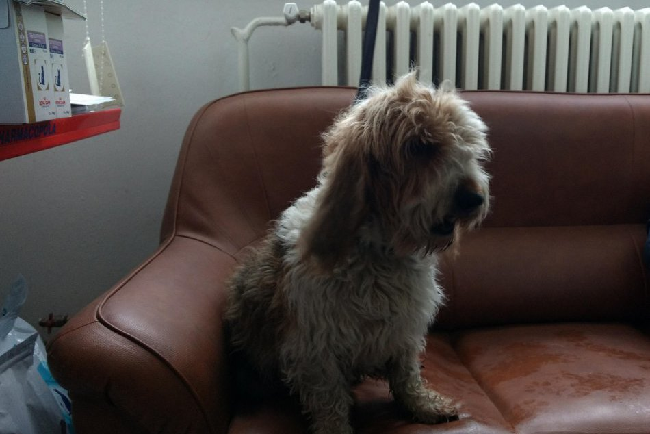 OBRAZOM: Veterinár zo Spišskej chová psa, akého ste asi ešte ani nikdy nestretli