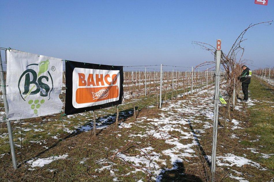 Úspech nitrianskeho študenta: Mladý vinohradník Marek najlepším na Slovensku