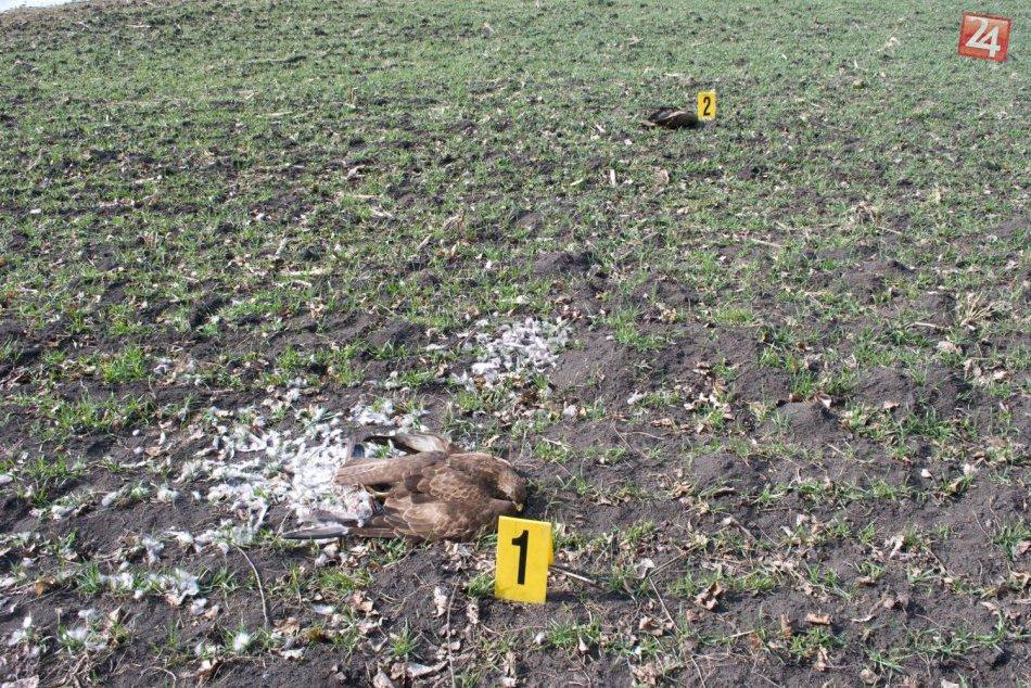 Ďalšie mŕtve dravce v našom okrese: Pravdepodobne ide o otravu