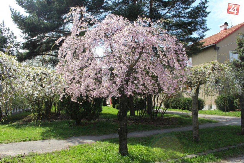 V OBRAZOCH: Bystrická ulica, ktorá doslova kvitne do krásy