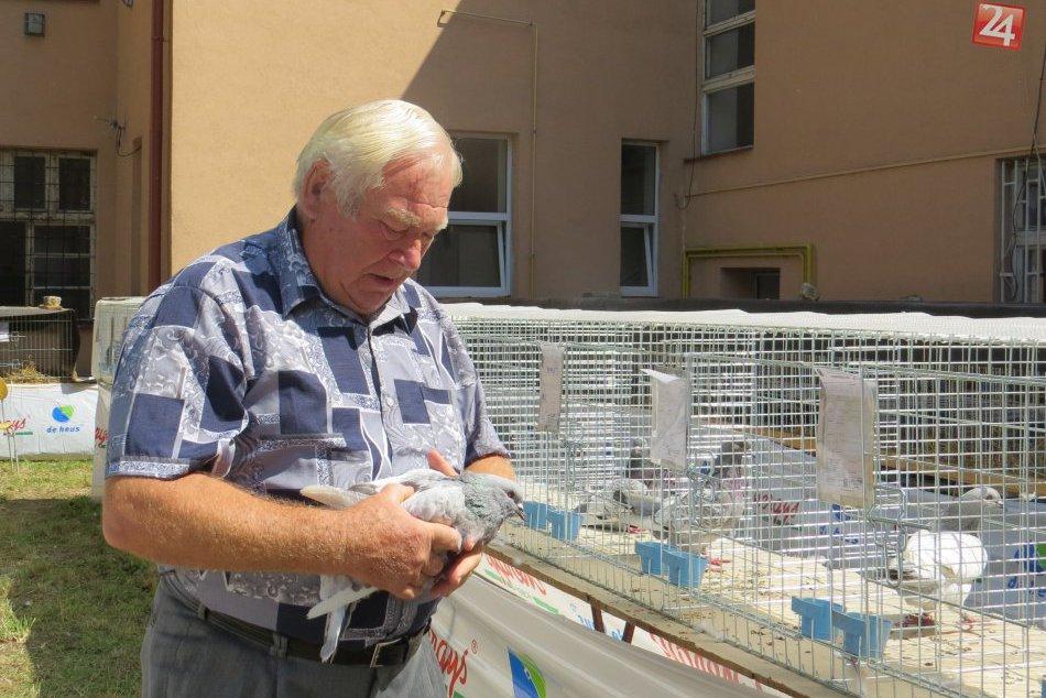 Michalovčan Matej sa má veru čím pochváliť: Takýchto krásnych holubov chová!