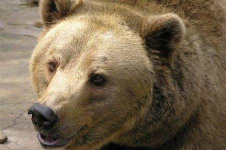 Medveď je síce podľa slov poľovníkov mierumilovným a plachým zvieraťom e8105be81f7