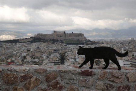 Veľká čierna mačička na svete