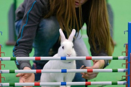 Nič roztomilejšie dnes neuvidíte  Nitra hostila majstrovstvá v králičom  hope a961d7843e7