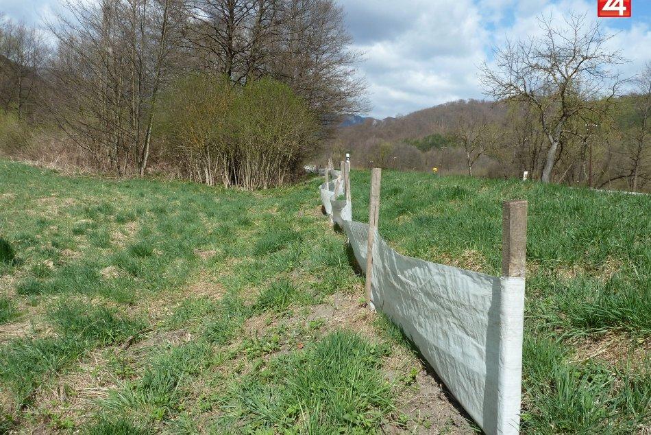bariery na zaby