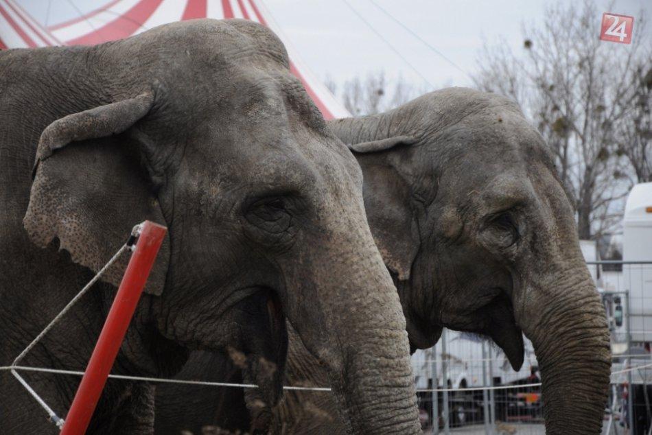 cirkus presov