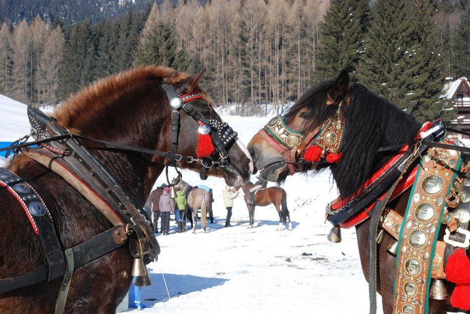 Zimne_jazdecke_hry