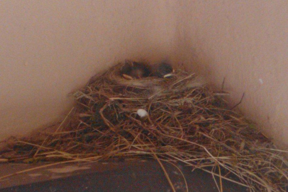 Máriu na terase prekvapili roztomilé mláďatká