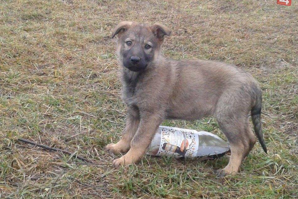 Vo Zvolene funguje Motel pre psov!