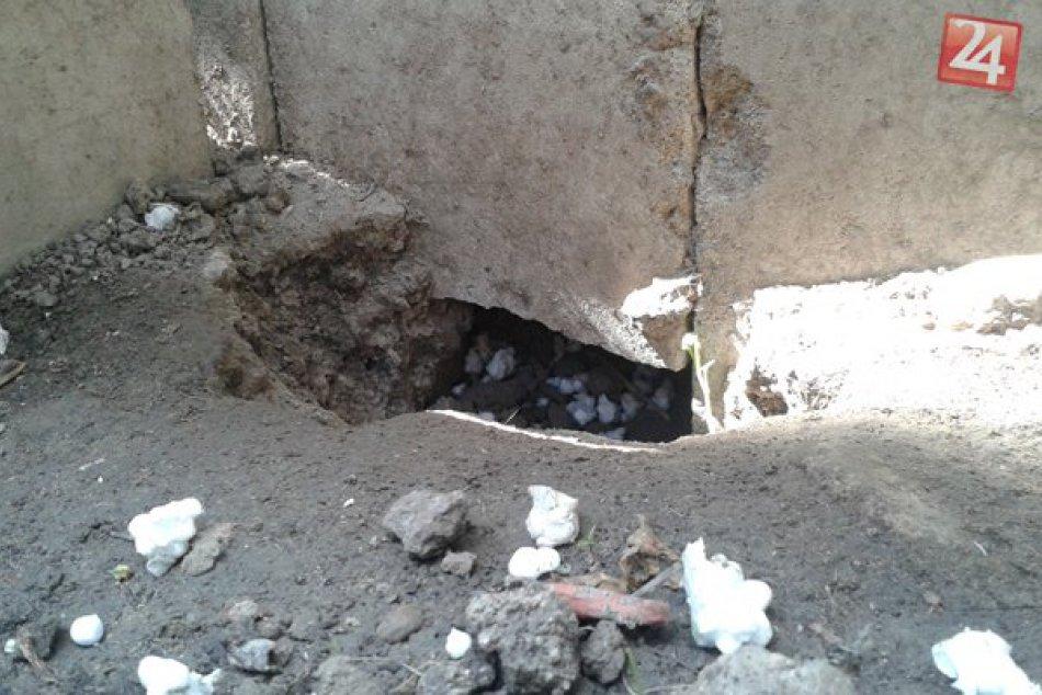 Potkany v záhrade a pivnici