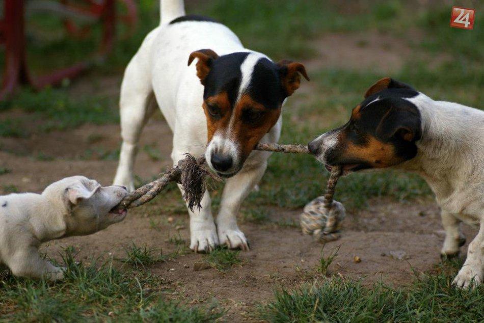 Pozrite, koľko lásky, harmónie a porozumenia vládne v ríši zvierat :)