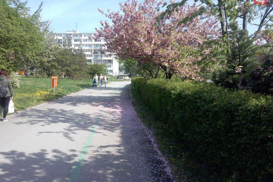 FOTO: Ulica doslova kvitnúca krásou: Aj takto vyzerá jar v Košiciach!