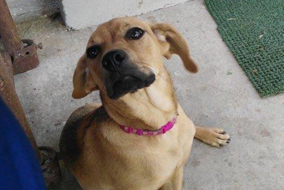 Aktuálna ponuka psíkov na adopciu v Topoľčanoch