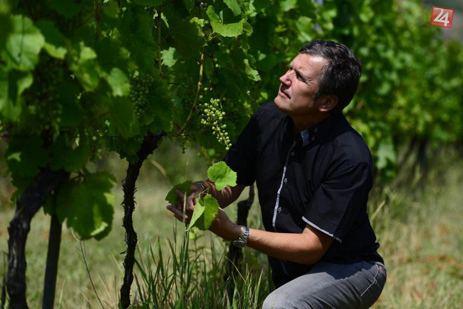 Pri Brekove: Najsevernejší oficiálne registrovaný vinohrad na Slovensku