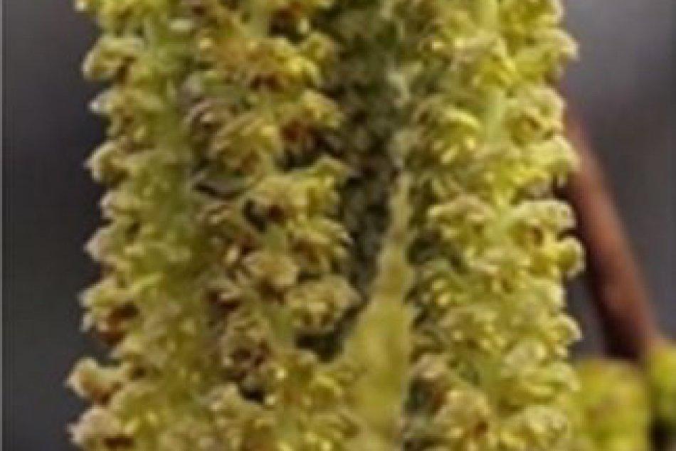 V Arboréte Mlyňany momentálne kvitnú tieto rastliny