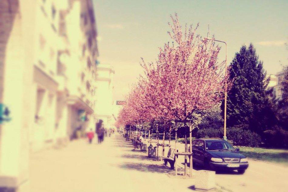 OBRAZOM : Rozkvitnutá jar v Žiline