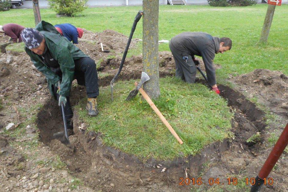 Presádzanie stromov v Dúbravke