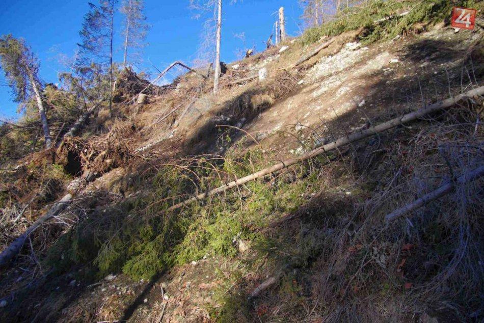 Lykožrút v Tatrách ničí živé stromy