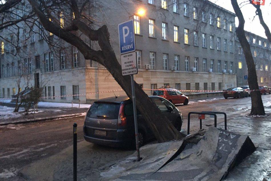 Vyvalený strom