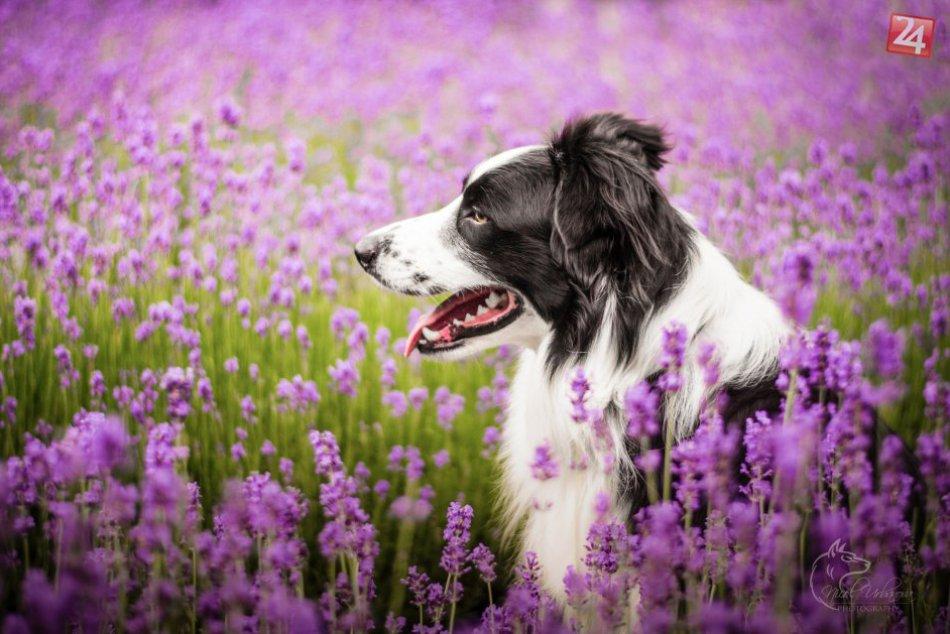 OBRAZOCH: Keď sa psíky premenia na fotomodelov