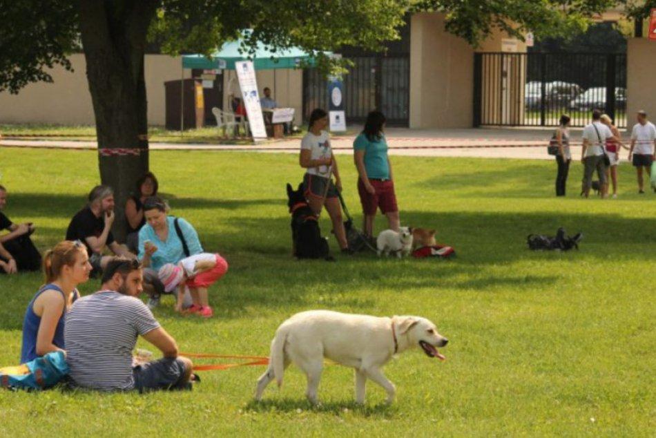 Festival psích športov 2016