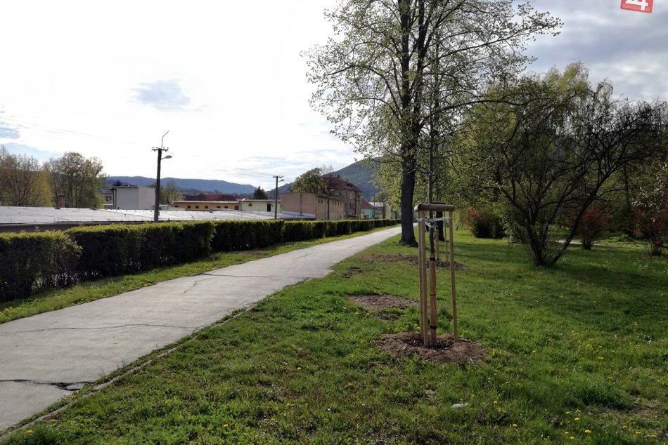 Obrazom: Vo veľkom parku pribudli nové stromy