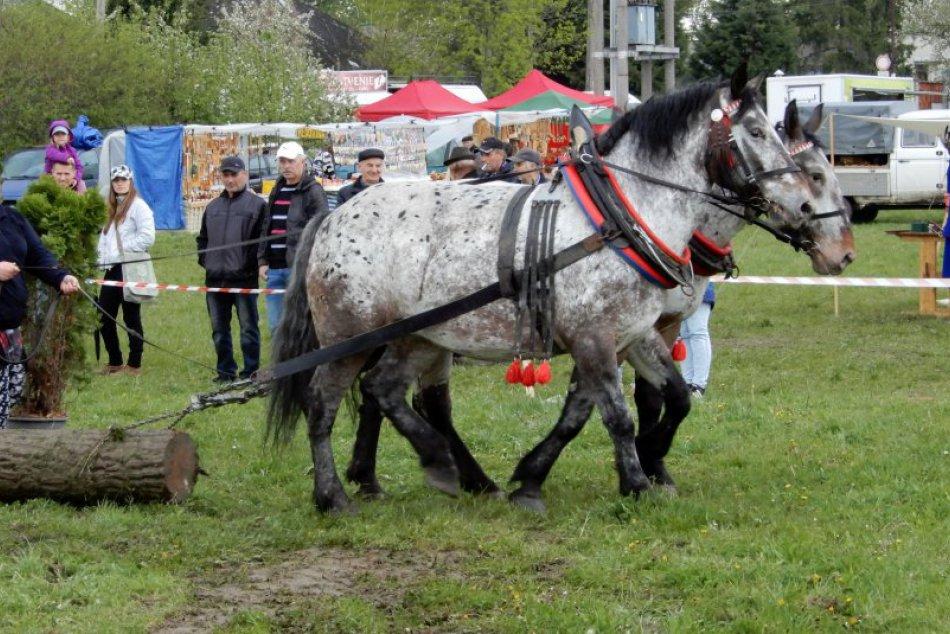 V OBRAZOCH: Lučenčanov pritiahli preteky konských záprahov